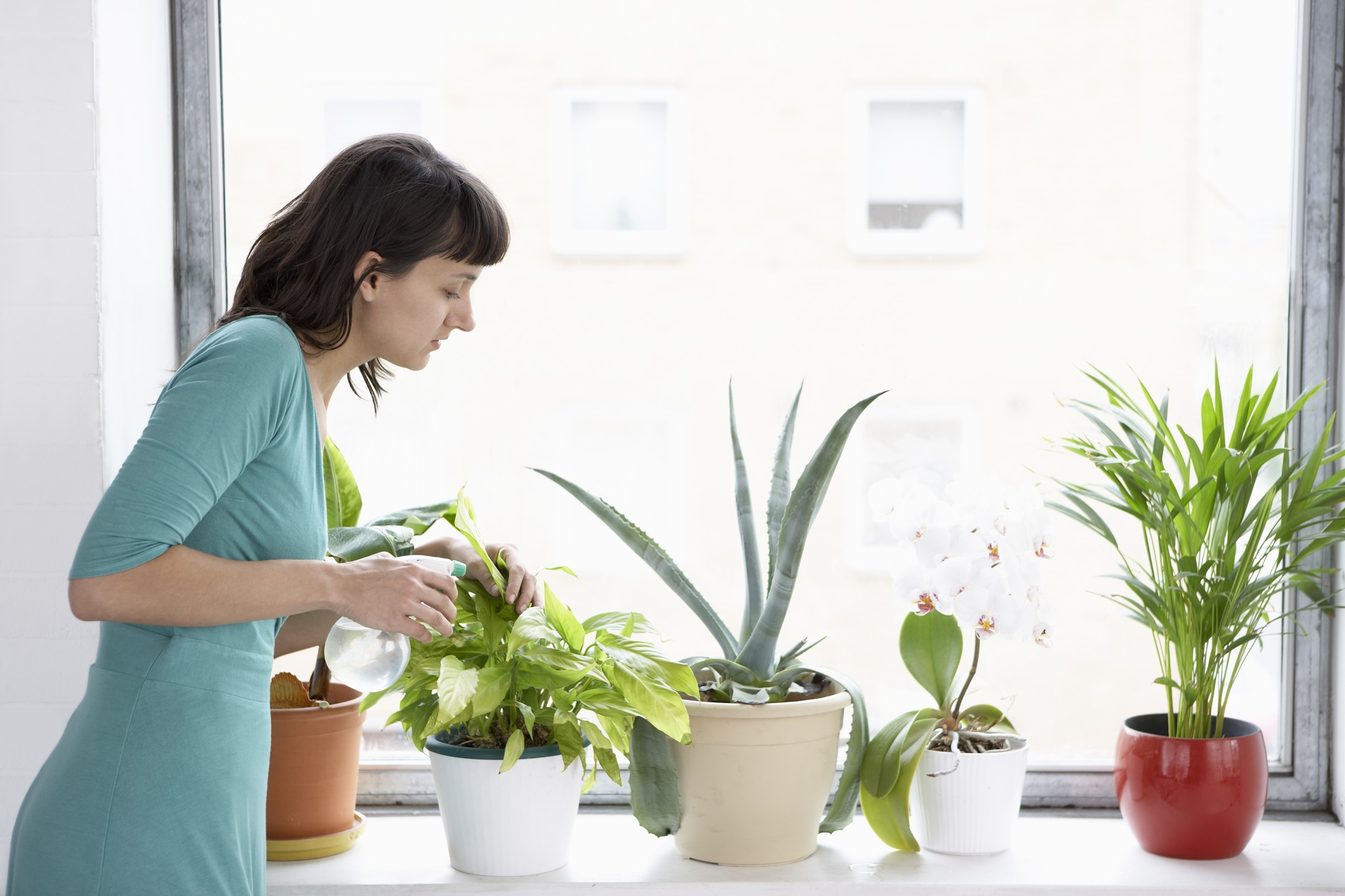 Five great places to buy houseplants in Calgary